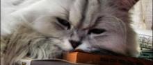 7 Factos Fascinantes Sobre Gatos