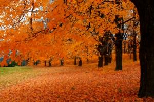 25 Coisas a Fazer no Outono