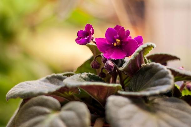 As 5 Melhores Plantas Para Ter em Casa
