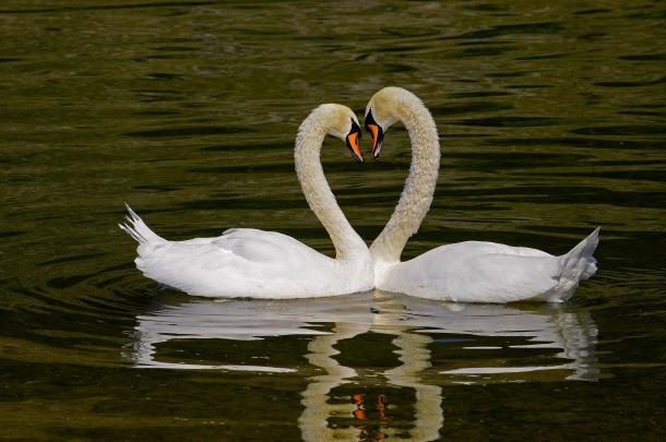 E Esta Hein? Os animais são mais românticos e atenciosos do que o homem e estes 12 factos o comprovam.